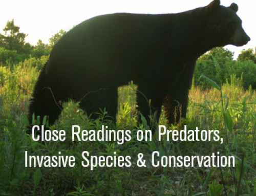 Close Readings on Predators, Invasive Species and Conservation