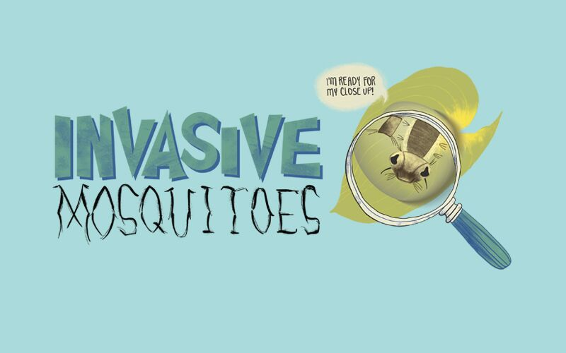invasive-mosquito-project