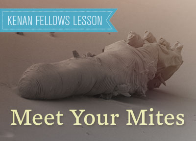 mee-your-mites-kenanfellows