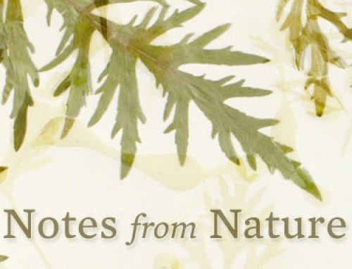 Notes From Nature
