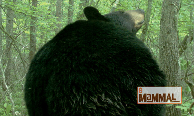 res_mammals2