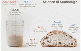 Science of Sourdough