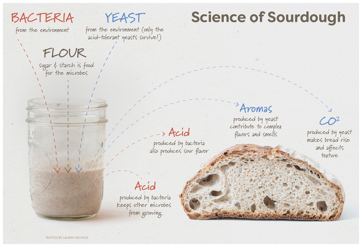 Science of Sourdough