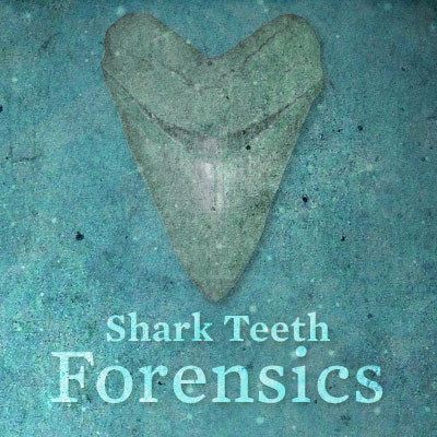 shark_teeth_forensics_project1