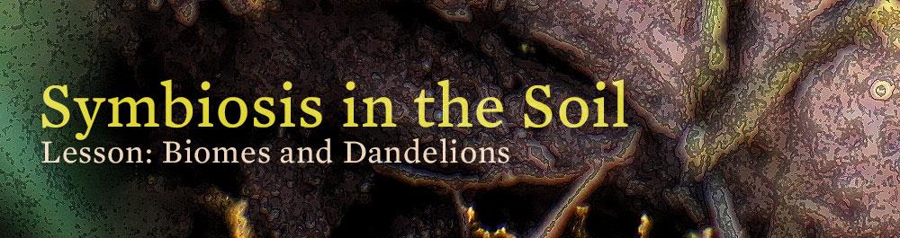 soil_symbiosis_biomes_dandelions