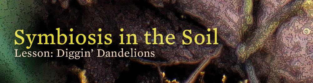soil_symbiosis_diggin_dandelions