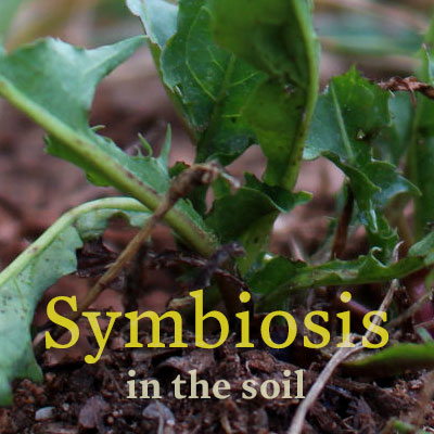 soil_symbiosis_project