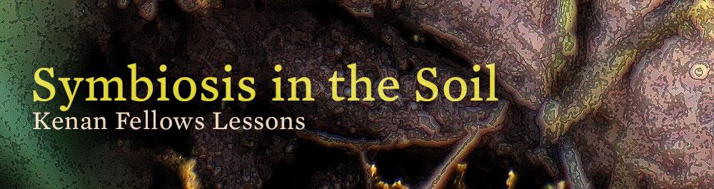 soil_symbiosis_v5